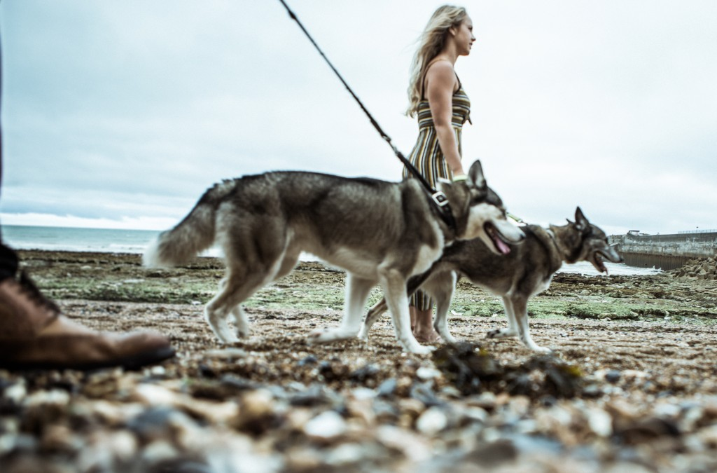 dogs on beach huskies brighton marina