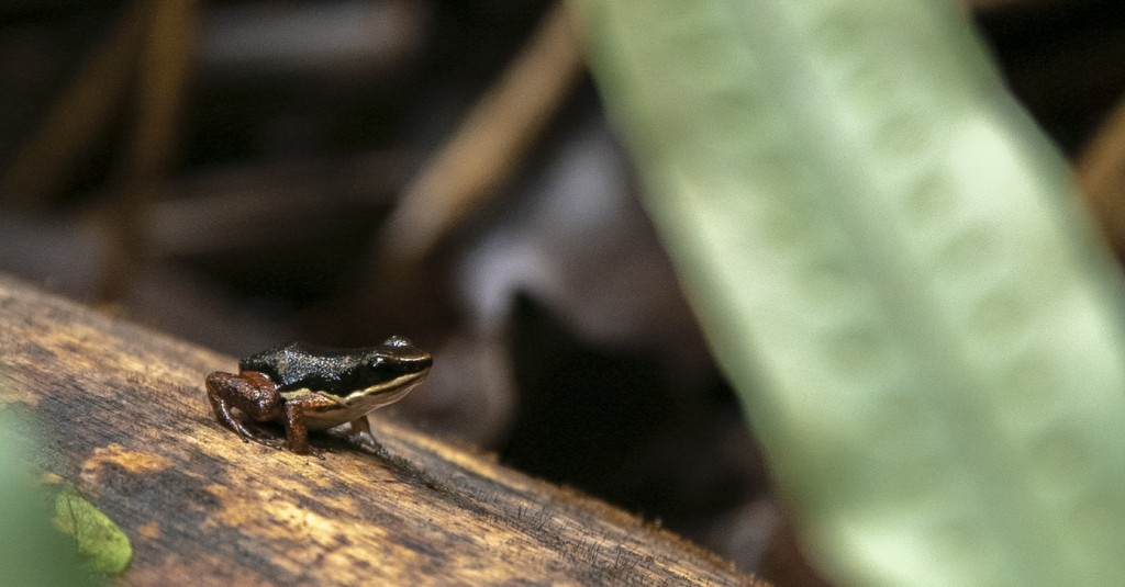 cool frog picture poisonous costa rica rainforest