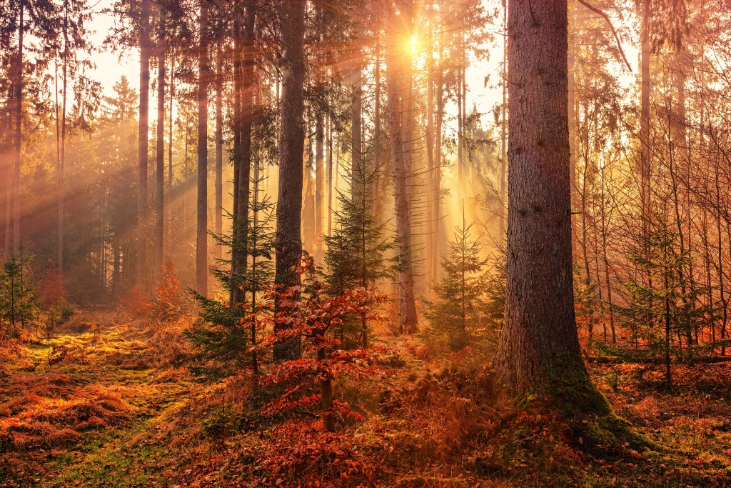 get outdoors in autumn mood boosting tips