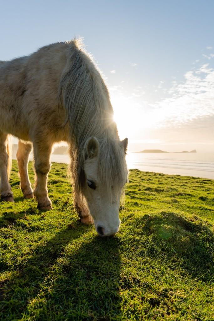 horse countryside rhossili bay